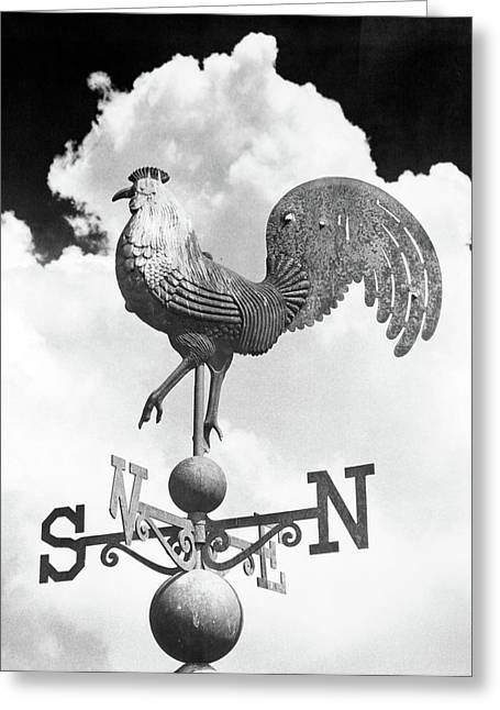 1930s Rooster Gallus Gallus Domesticus Greeting Card