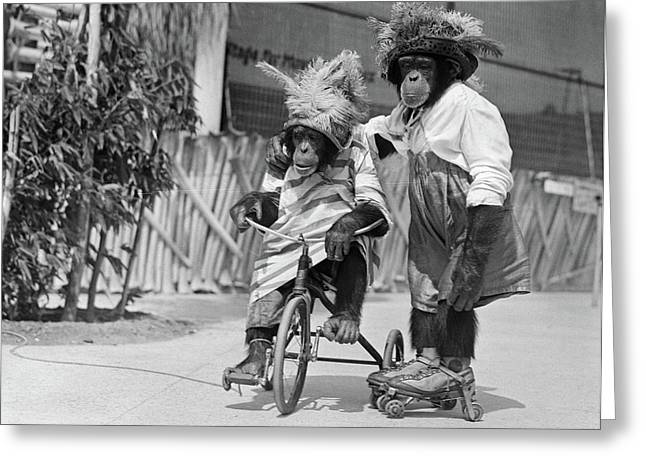 1930s Two Chimpanzees Wearing Straw & Greeting Card