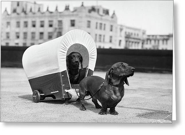 1930s Two Dachshund Dogs One Pulling Greeting Card