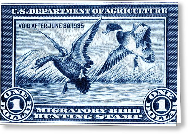 1934 American Bird Hunting Stamp Greeting Card
