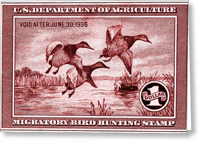 1935 American Bird Hunting Stamp Greeting Card by Historic Image