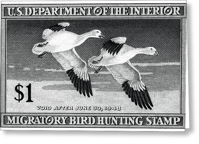 1947 American Bird Hunting Stamp Greeting Card by Historic Image