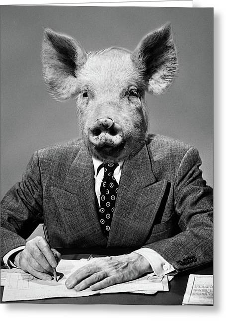 1950s 1960s 1970s Montage Of Pig Headed Greeting Card