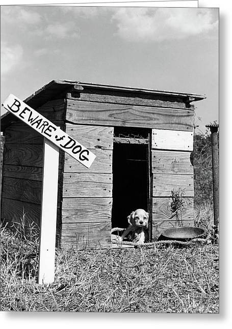 1950s Cocker Spaniel Puppy In Doghouse Greeting Card