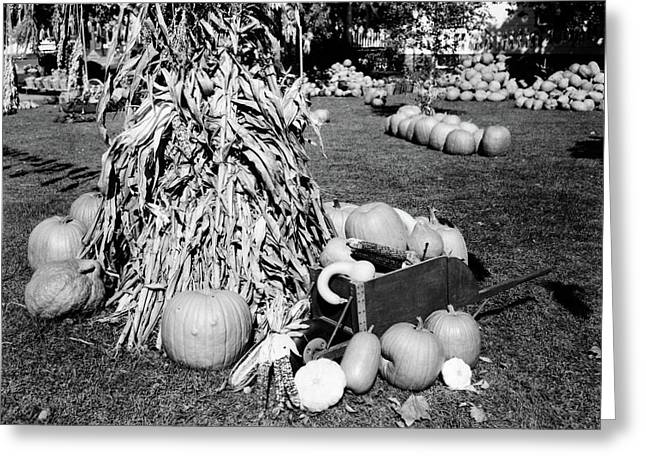 1950s Dried Corn Stalks Surrounded Greeting Card