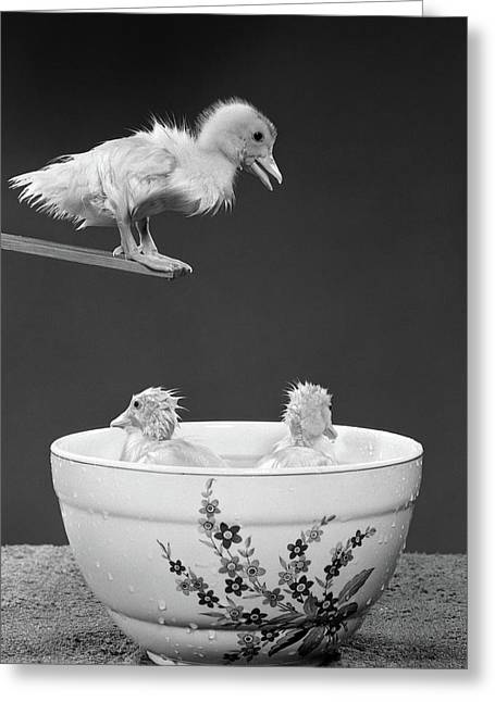 1950s Duckling On Diving Board Looking Greeting Card