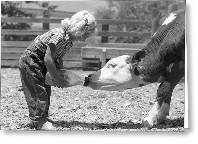 1950s Little Blonde Girl Feeding Calf Greeting Card
