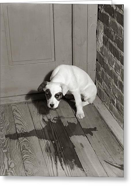 1950s Sad Dog In Corner Ashamed House Greeting Card