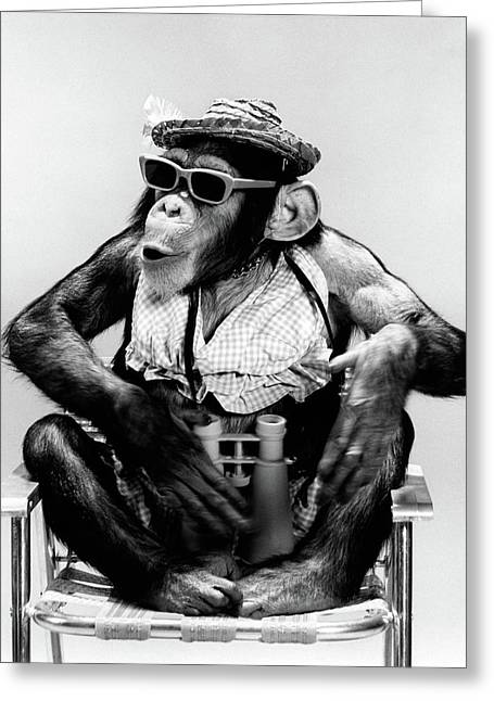 1960s Chimp Sitting In Lawn Chair Greeting Card