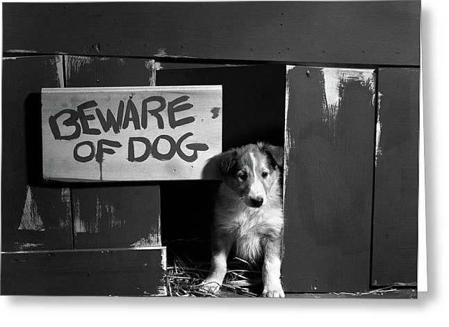 1960s Collie Dog Puppy Sitting In Door Greeting Card
