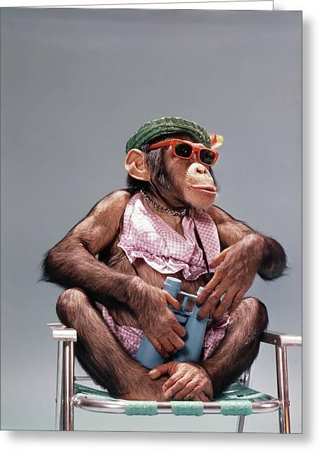 1960s Female Chimpanzee Wearing Summer Greeting Card