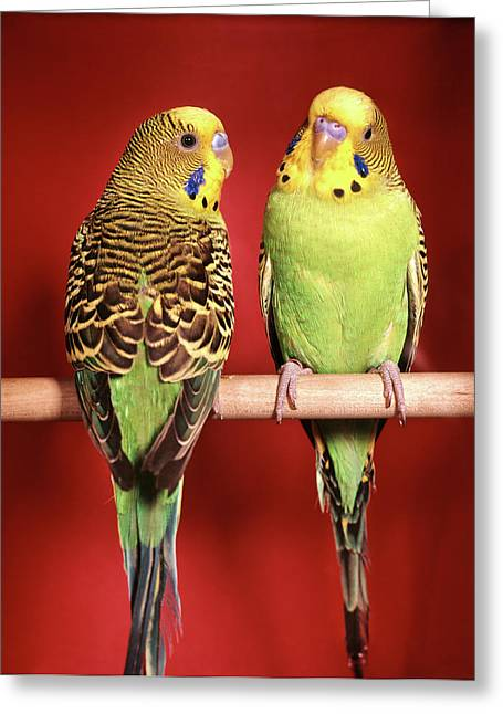1960s Pair Of Two Yellow Green Greeting Card