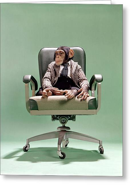 1970s Chimpanzee Sitting On Office Chair Greeting Card