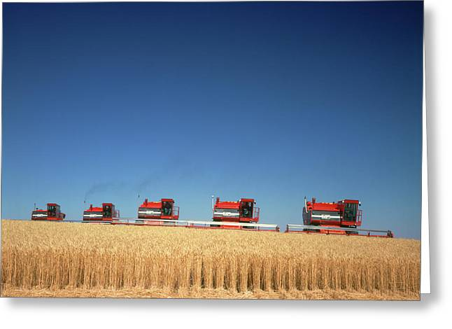 1970s Five Massey Ferguson Combines Greeting Card