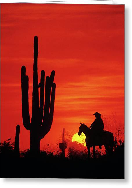 1980s Anonymous Cowboy Riding On Horse Greeting Card