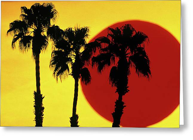 1990s 3 Silhouetted Palm Trees Greeting Card