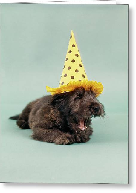 1990s Skye Terrier Tired From Too Much Greeting Card
