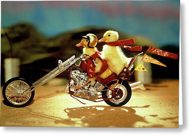 1990s Two Baby Ducklings Riding Greeting Card