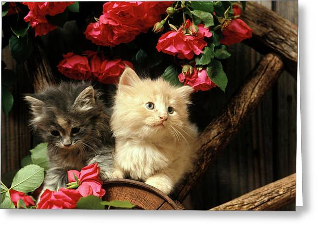 1990s Two Kittens On Wagon Wheel Greeting Card