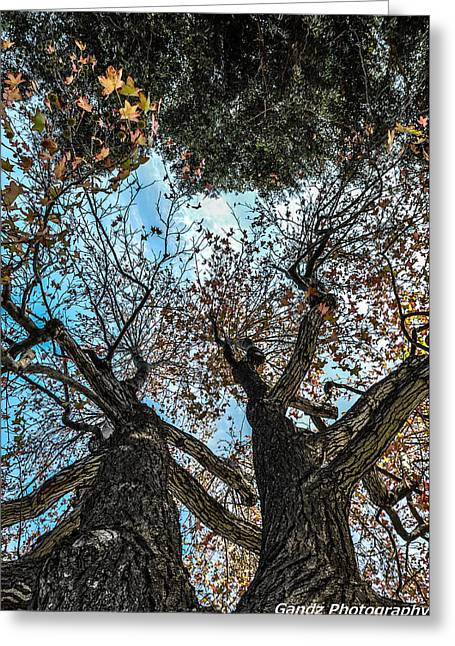 1st Tree Greeting Card by Gandz Photography