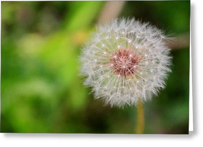 A Dandy Dandelion Greeting Card