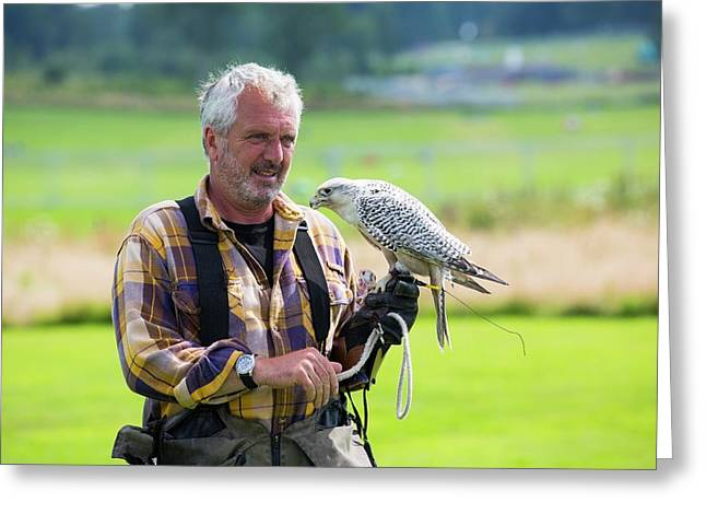 A Falconry Display Greeting Card by Ashley Cooper