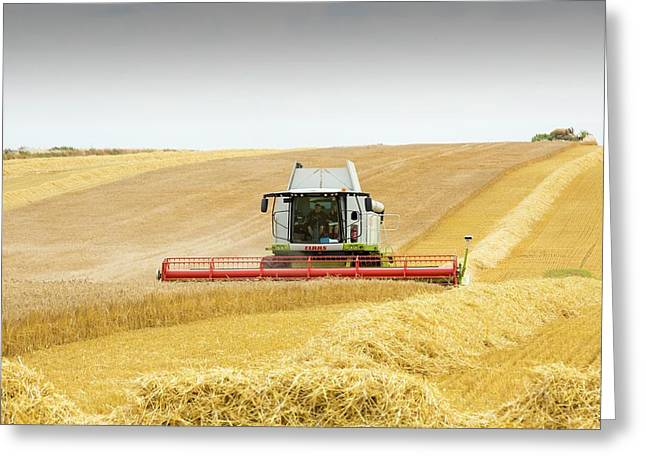 A Farmer Harvesting Wheat Greeting Card by Ashley Cooper