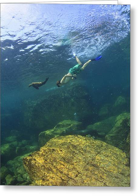A Tourist Swims Underwater With A Sea Greeting Card