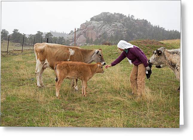 Abbey Of St. Walpurga Cattle Ranch Greeting Card by Jim West