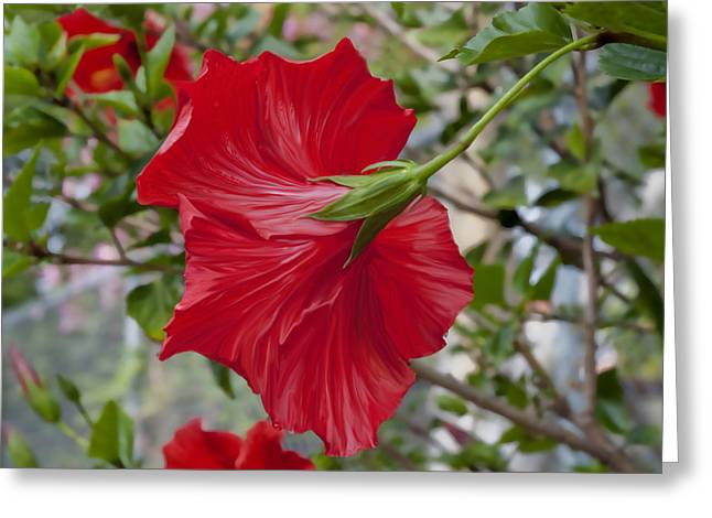Abstract Hibiscus Greeting Card
