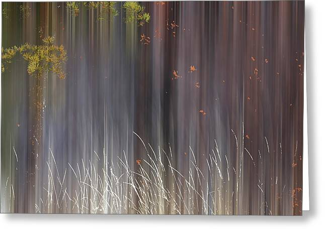 Abstract Trees With Motion Blur Greeting Card
