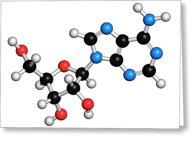 Adenosine Purine Nucleoside Molecule Greeting Card