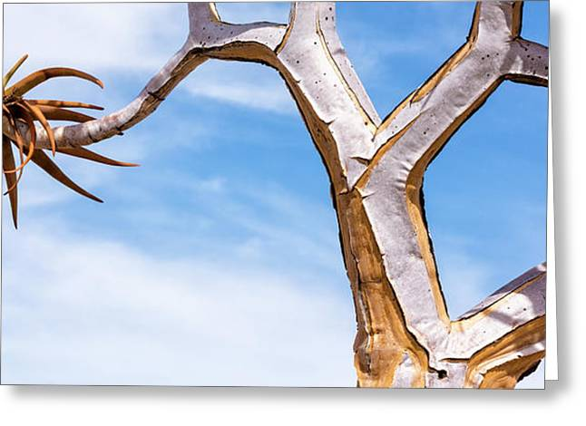 Africa, Namibia Close-up Of Quiver Tree Greeting Card by Jaynes Gallery