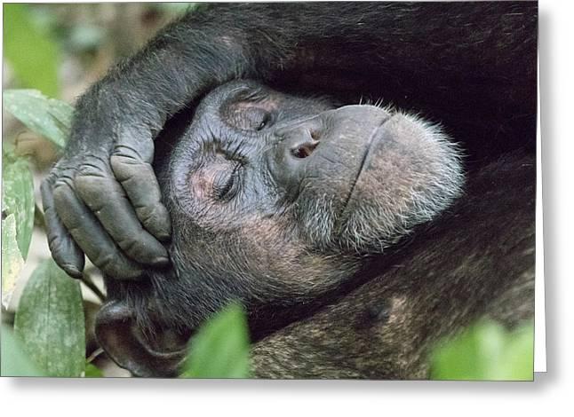 Africa, Uganda, Kibale Forest National Greeting Card