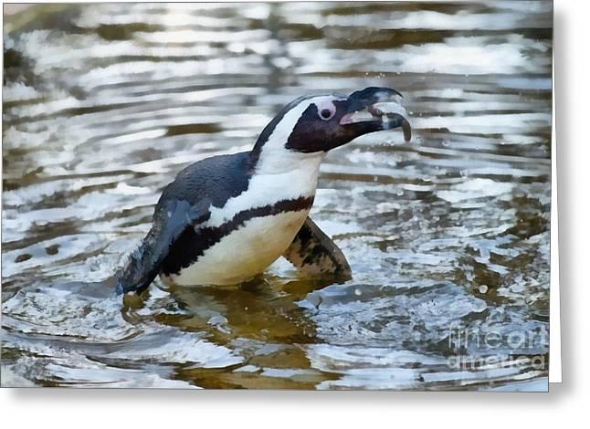 African Penguin Eating Fish Greeting Card