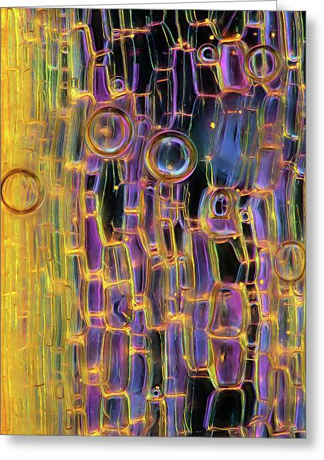 Air Bubbles On Plant Tissue Greeting Card by Marek Mis