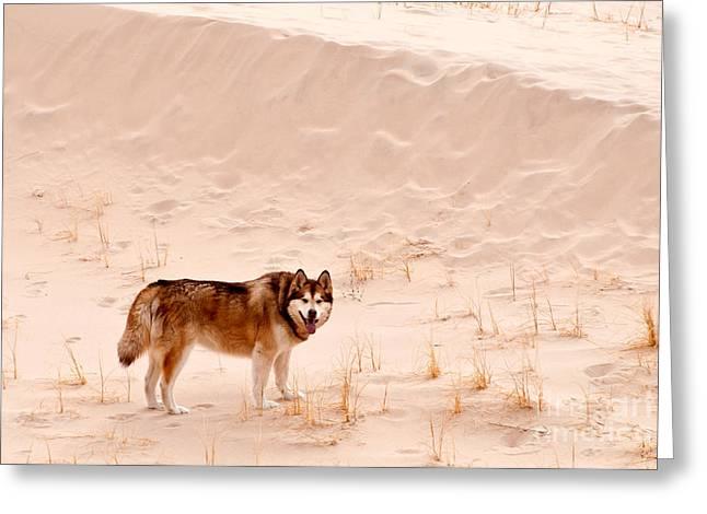 Alaskan Malamute At Mojave National Greeting Card by Mark Newman