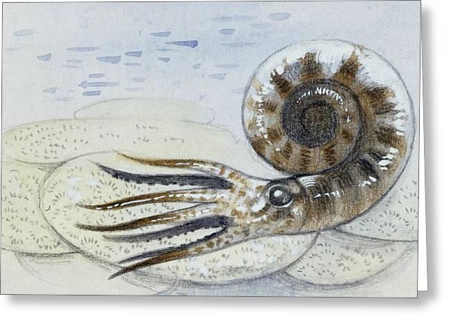 Ammonite Greeting Card by Deagostini/uig