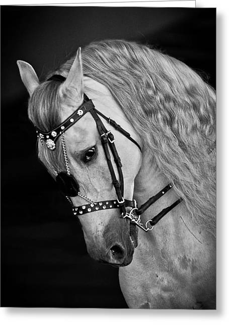 Andalusian Greeting Card by Wes and Dotty Weber