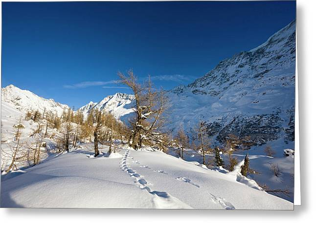 Animal Tracks In Deep Snow In Winter Greeting Card by Martin Zwick