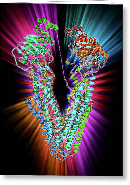 Antibodies And Their Antigen Greeting Card by Laguna Design