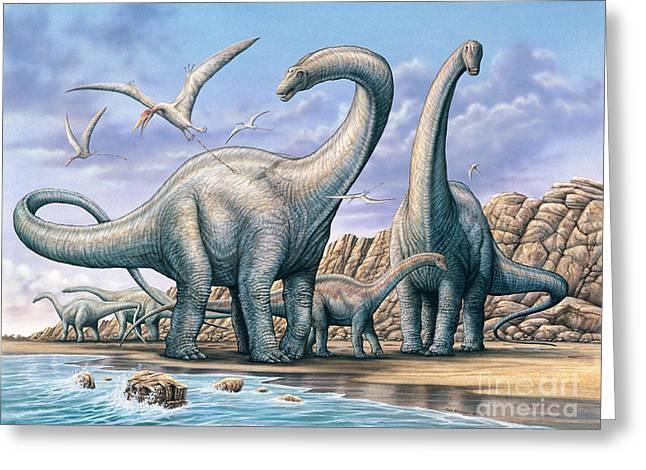 Apatosaurus Group On Beach Greeting Card by Phil Wilson