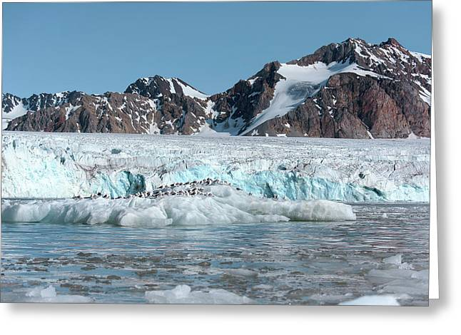 Arctic Landscape Greeting Card by Dr P. Marazzi