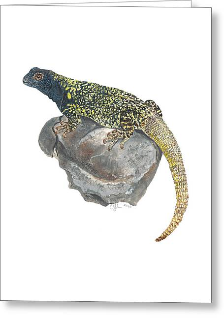Argentine Lizard Greeting Card