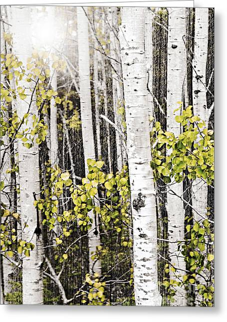 Aspen Grove Greeting Card by Elena Elisseeva
