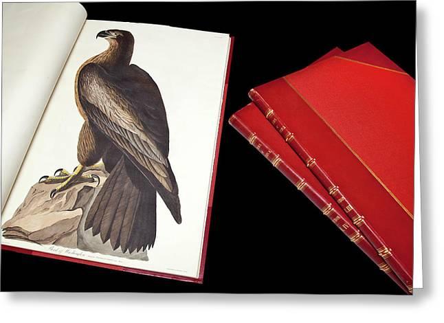 Audubon's The Birds Of America Greeting Card