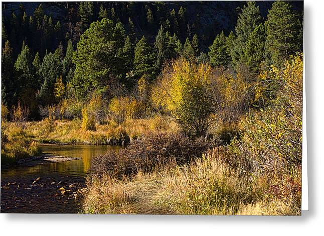 Autumn In The Rockies Greeting Card by Anne Rodkin
