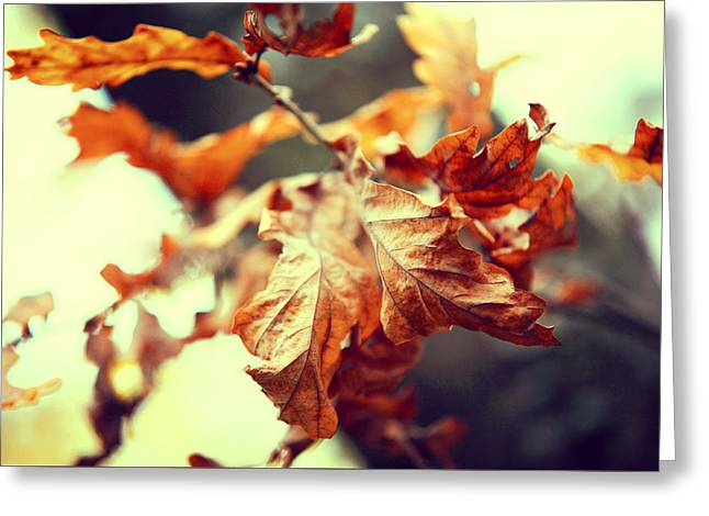 Autumn Leaves Greeting Card by Jenny Rainbow