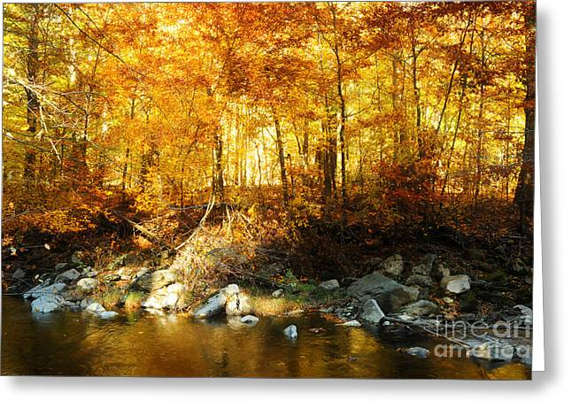Autumn Stream Greeting Card by HD Connelly
