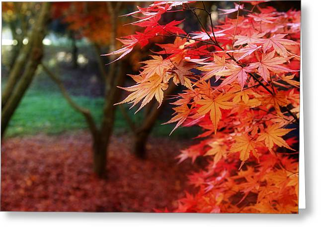 Autumnal Forest Greeting Card by Les Cunliffe